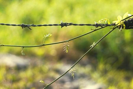 greengrass: Grass grassflower greengrass