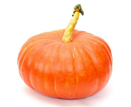 stocky: big orange Pumpkin isolated on white background