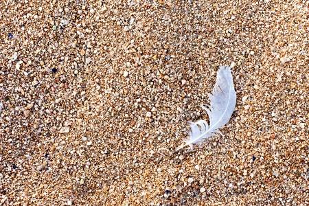 Bird feather on the brown beach sand  Stok Fotoğraf