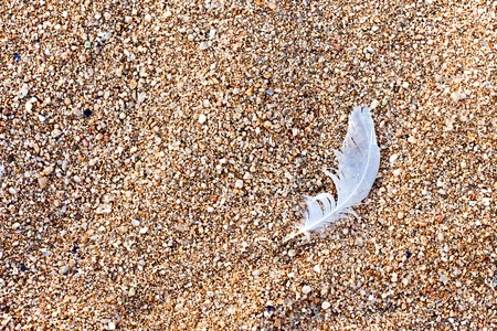 Bird feather on the brown beach sand  Stock Photo