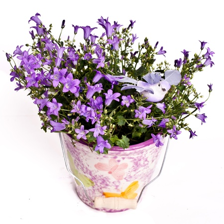 violet flowers in vase isolated on white photo