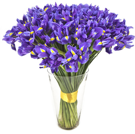 bouquet of irises  in vase isolated on white background