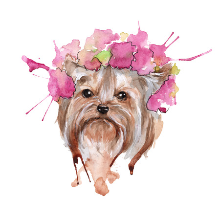illustration muzzle Yorkie dog breed. isolated. watercolor