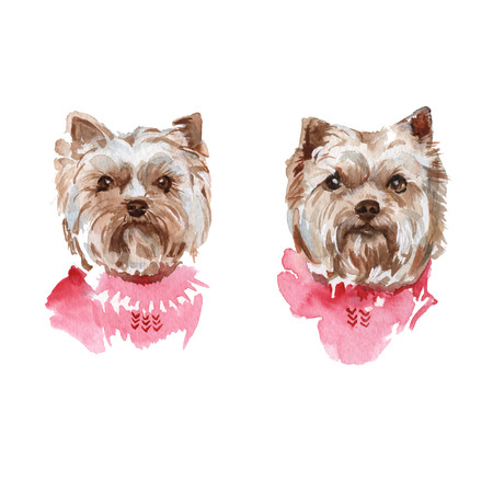 cheeky: illustration muzzle Yorkie dog breed. isolated. watercolor
