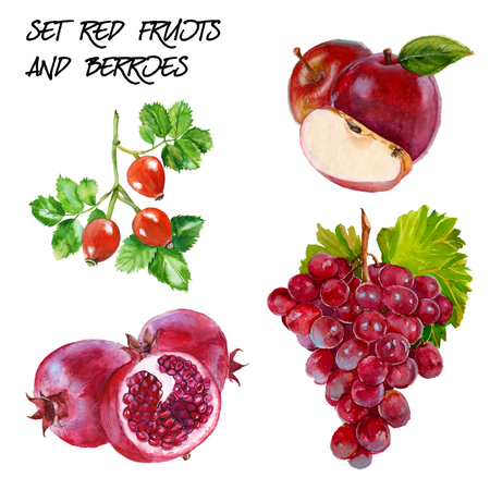 red grape: Set with red grapes, red apple, rosehip and pomegranate branch. isolated. hand-painted watercolor