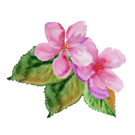 cherry blossom with leaves. isolated. watercolor illustration
