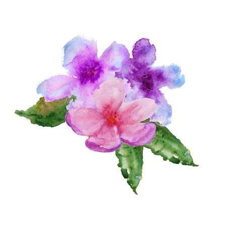japanese apricot: cherry blossom with leaves. isolated. watercolor illustration
