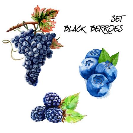 黒ブドウ、イチゴ、ブラックベリーを設定します。分離されました。手描きの水彩画