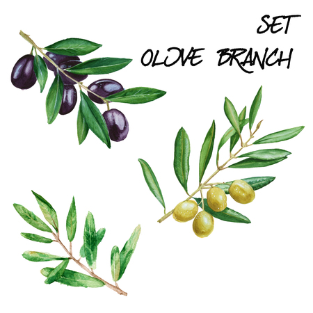Set with olive branches. isolated. hand-painted watercolor