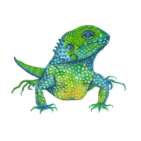 lizard Green Iguana in palm leaves. isolated. watercolor illustration