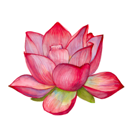 isolated flower: pink lotus flower. isolated on white background. watercolor illustration.