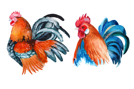 rooster. isolated. year of the rooster. watercolor illustration Stock Photo