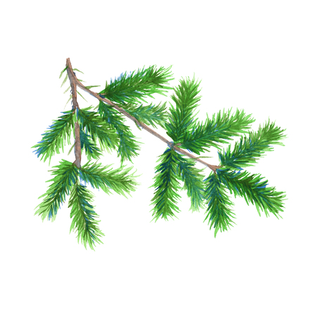 christmas tree branch: Christmas tree branch. Isolated on a white background. Watercolor Christmas illustration.