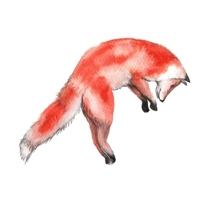 Red Fox. Forest predator. Isolated on a white background. Watercolor illustration.
