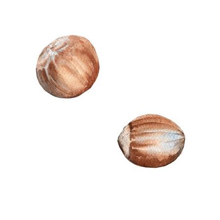 albero nocciolo: Impostare nocciole dado. Isolato su sfondo bianco. Illustrazione dell'acquerello.