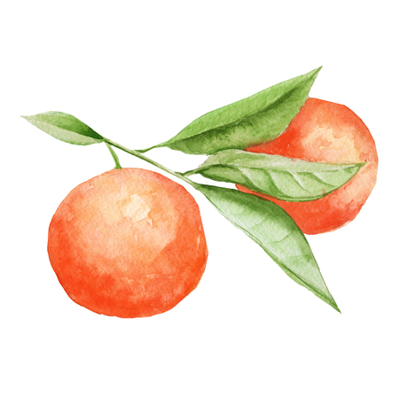 oranges on a branch with leaves. isolated on white background. watercolor illustration.