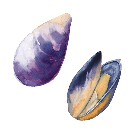 almeja: Two mussels in the shell. Isolated on white background. Foto de archivo