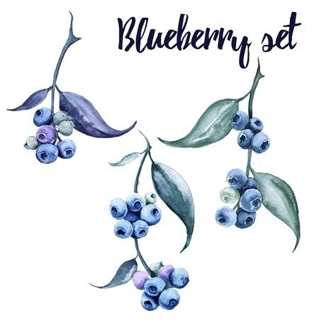 블루 베리와 분기합니다. 흰색 배경에 고립. 수채화 그림입니다. 스톡 콘텐츠 - 75624307