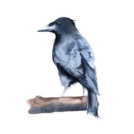 Mangel Raven. Isoliert auf weißem Hintergrund. Aquarellabbildung