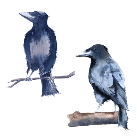 lack Raven. Isolated on white background. Watercolor illustration
