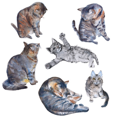 Set with cats. Isolated on white background. Watercolor illustration.