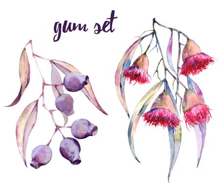 Branches de gomme avec des fleurs et des noix. Isolé sur fond blanc Illustration aquarelle. Banque d'images - 87069384