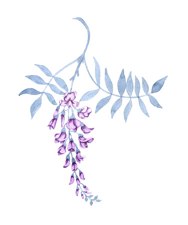Flowers on a branch of a wisteria. Isolated on white background. Watercolor illustration