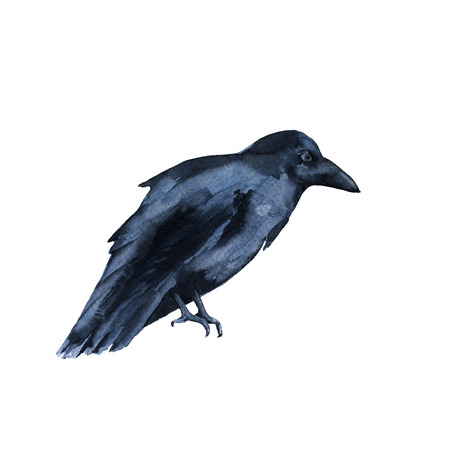Black Raven. Isolated on white background. Watercolor illustration.