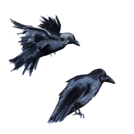 Two black crows. Isolated on white background. Watercolor illustration. Stock Photo