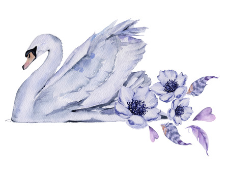 White Swan. Isolated on white background. Watercolor illustration