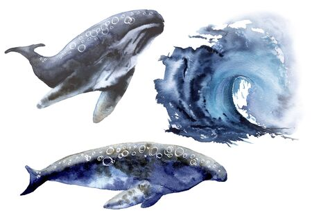 Set with sea whale. Isolated on a white background. Watercolor illustration