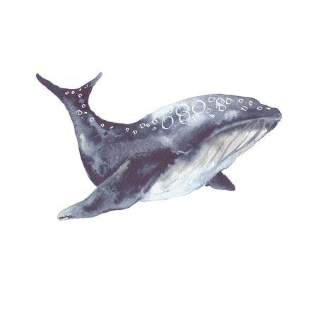 Baleine de mer. Isolé sur fond blanc. Illustration à l'aquarelle Banque d'images