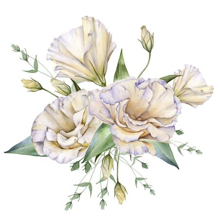 White Rose. Eustoma. Isolated on a white background. Watercolor illustration Banco de Imagens