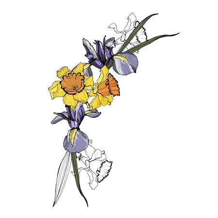 Sets of daffodil and iris flowers. Isolated over white background.