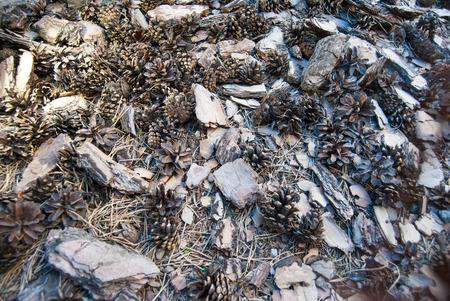 textures: cones textures