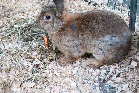 herbivores: Big rabbit Stock Photo