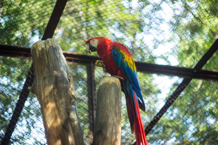 macaw: parrot macaw