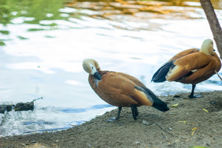 herbivores: beautiful birds are at the river