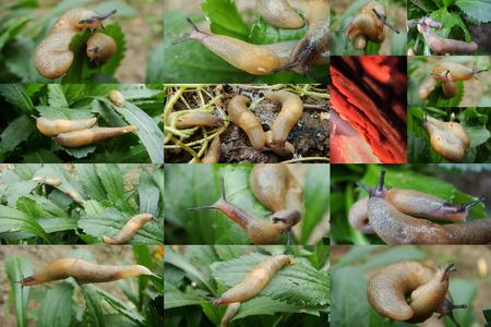 babosa: Slug, la humedad, la reproducción, verdes, hierba después de la lluvia, vapor, resbaladiza