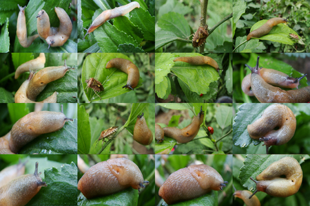 slug: Slug, moisture, reproduction, greens, grass after rain, steam, slippery Stock Photo