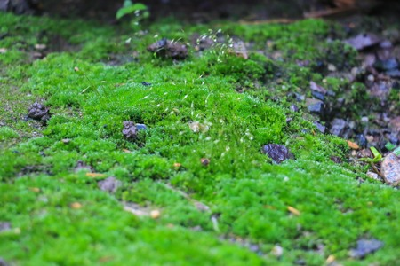 with moss: moss