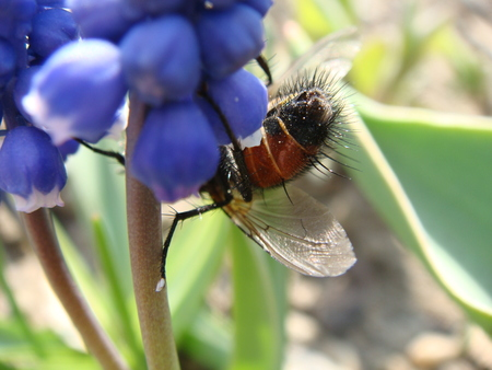 nature, texture, flowers, petal, plant, fly Stock Photo