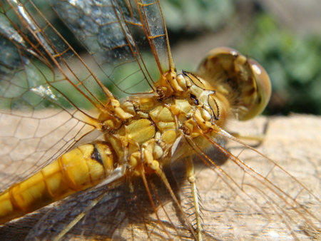 observations: nature, insects, winged dragonfly Stock Photo