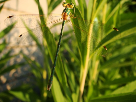 observations: dragonfly, insects, willow, nature, lake