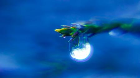 Coniferous droplet Stock Photo