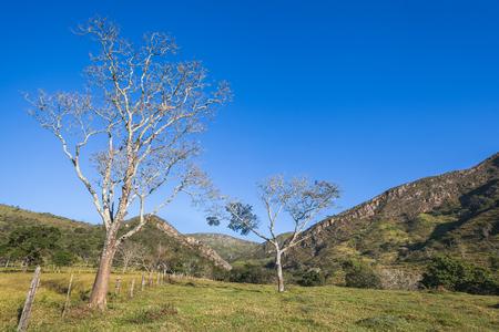 dry grass: Trees and mountains of Minas Gerais State - Serra da Canastra National Park - Brazil