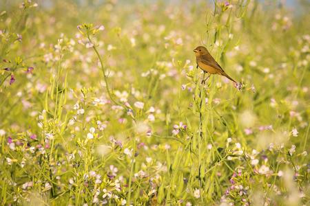 Vogel en Bloemen