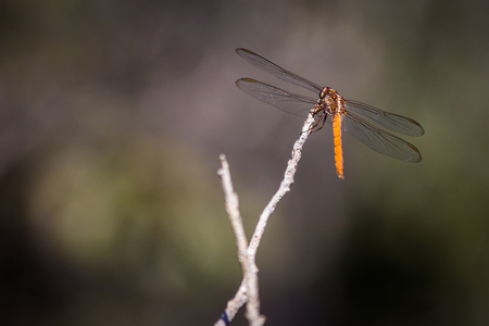 stopped: Dragonfly stopped on branch Stock Photo