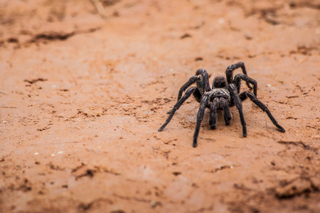 Spider walking at dirt road