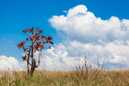 Foliage at dry fields at Serra da Canastra National Park - Minas Gerais - Brazil